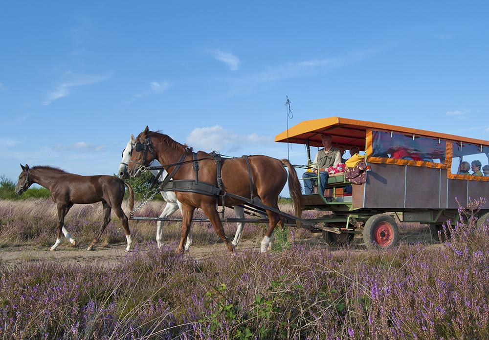 Mit Pony und Kremser in der Retzower Heide