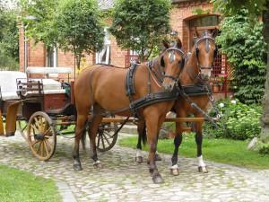 Kutsche in Gnevsdorf