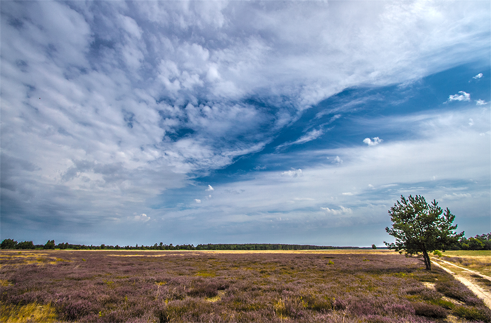 In der Retzower Heide