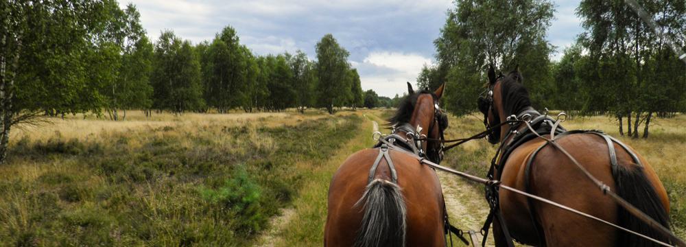 Kutschfahrt durch die Retzower Heide